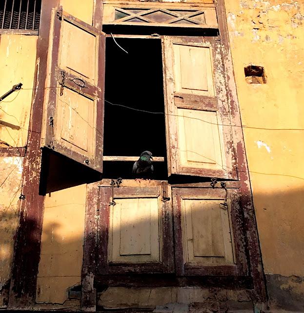 window, sketch artist, ilovesketchart, bird feeder, photography, architecture, perspective, Ahmadabad, heritage city, walk, street photography,