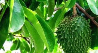99% 40 Jenis Tumbuhan yang Dapat Dijadikan Obat Sehat Alami