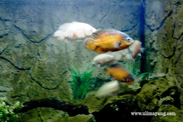 jual-beli-aquarium-ikan-seluruh-indonesia-terpercaya-harga-murah-aman-qualitas-bagus