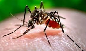 SALUD   Pergamino: se detectó un caso de zika