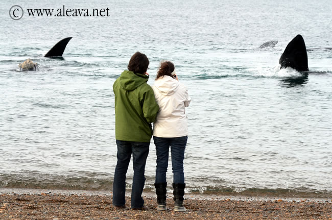 Whale Watching Season in Peninsula Valdes