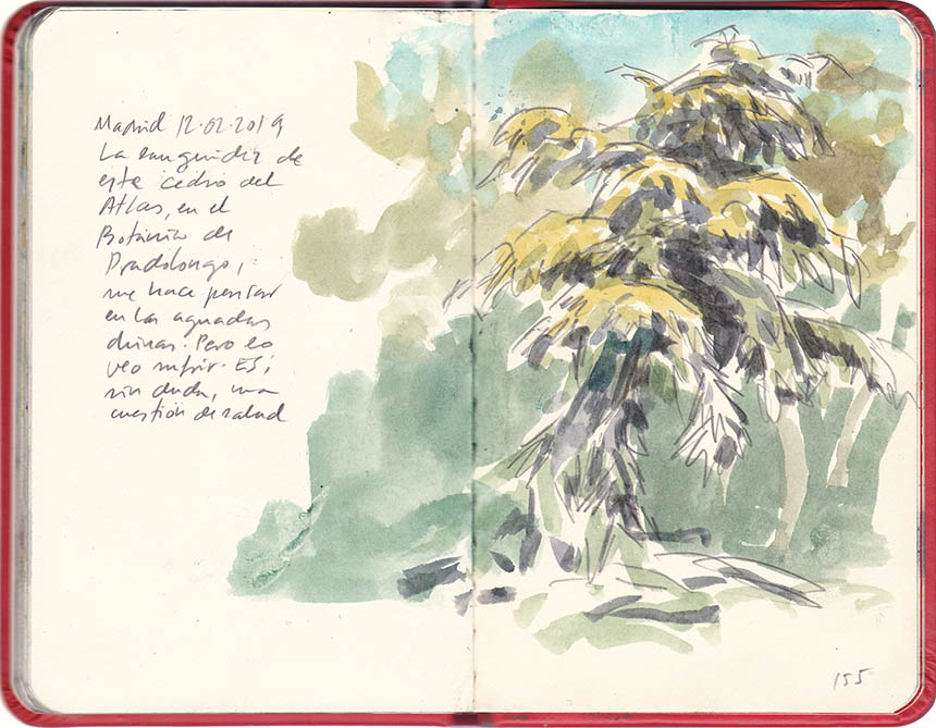 In few strokes: this languid cedar