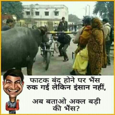 Best Funny Pictures in The World: Akal Badi ya Bhains !