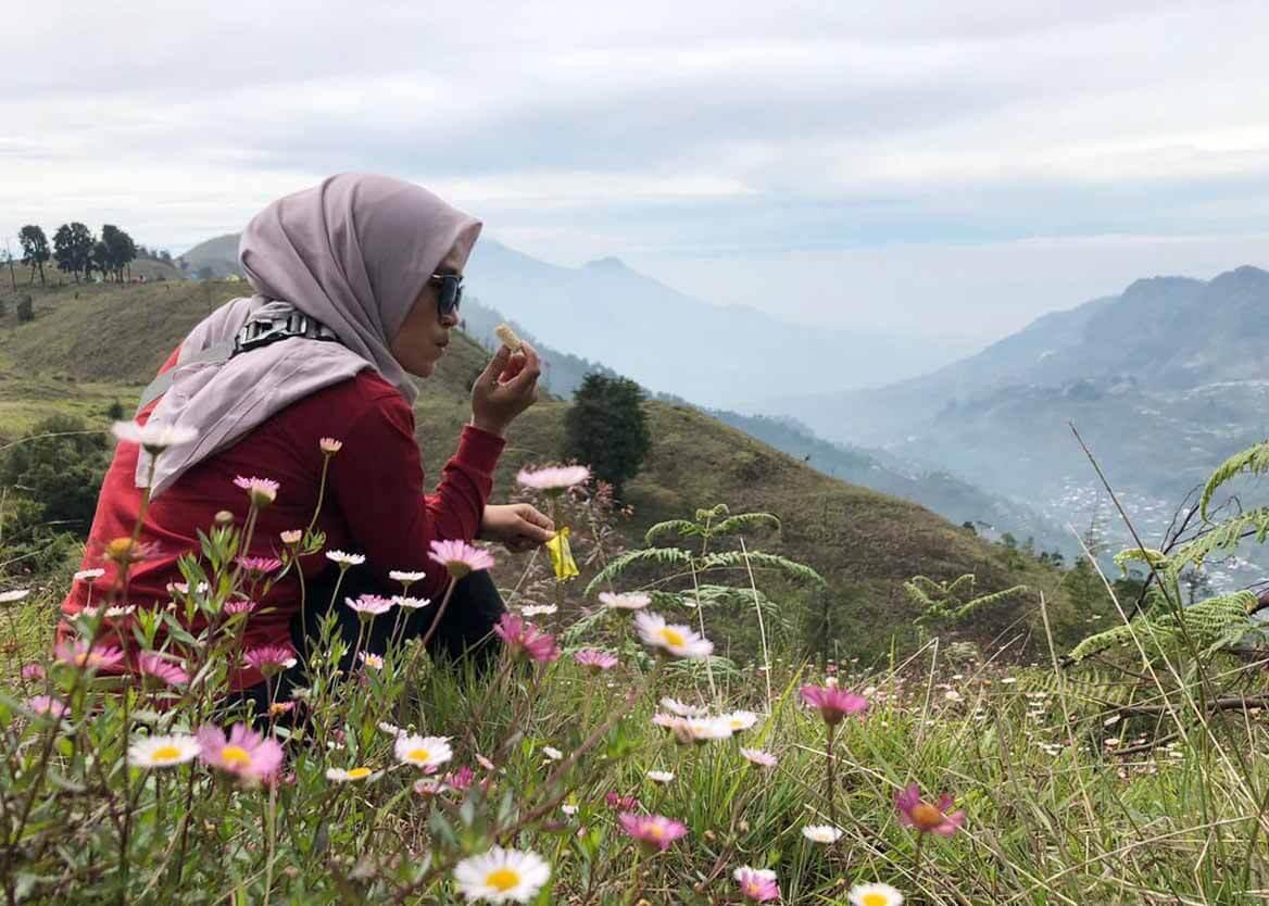 Padang  Daisy Gunung Prau - Foto Instagram irva_herliyanty