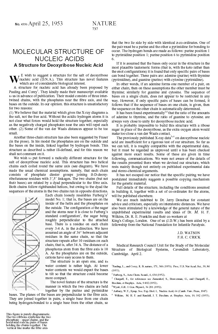 Essay on watson and crick