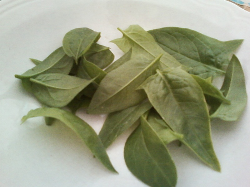 Harvested Spinach