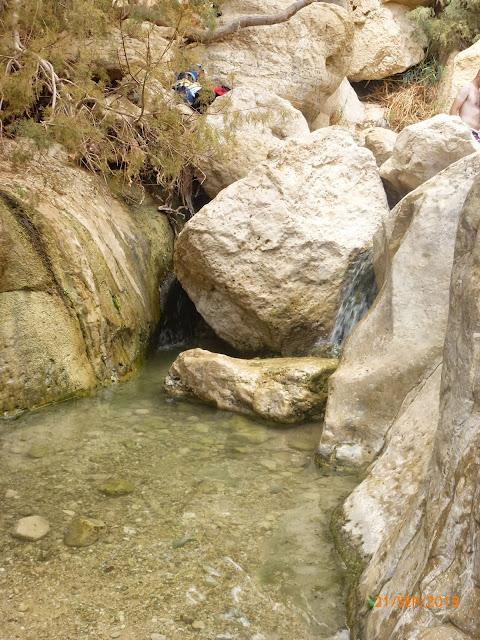 שמורת נחל ערוגות שופעת מים
