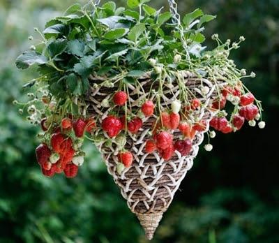 bertani buah memanfaatkanbarang bekas