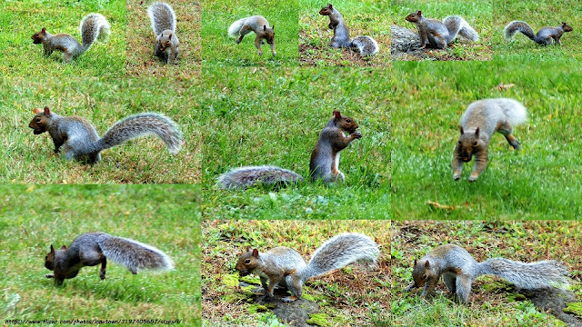 Squirrel Nut Burying Frenzy