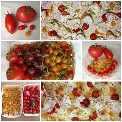 Romantischeslandleben Tomaten Saen Und Selbst Ziehen