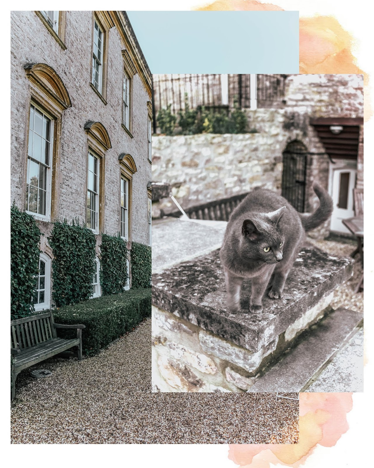 Ston Easton Park Hotel Resident Grey Cat