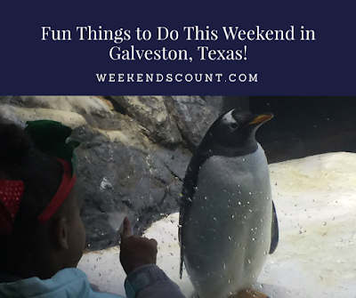 Things to Do in Galveston for Families