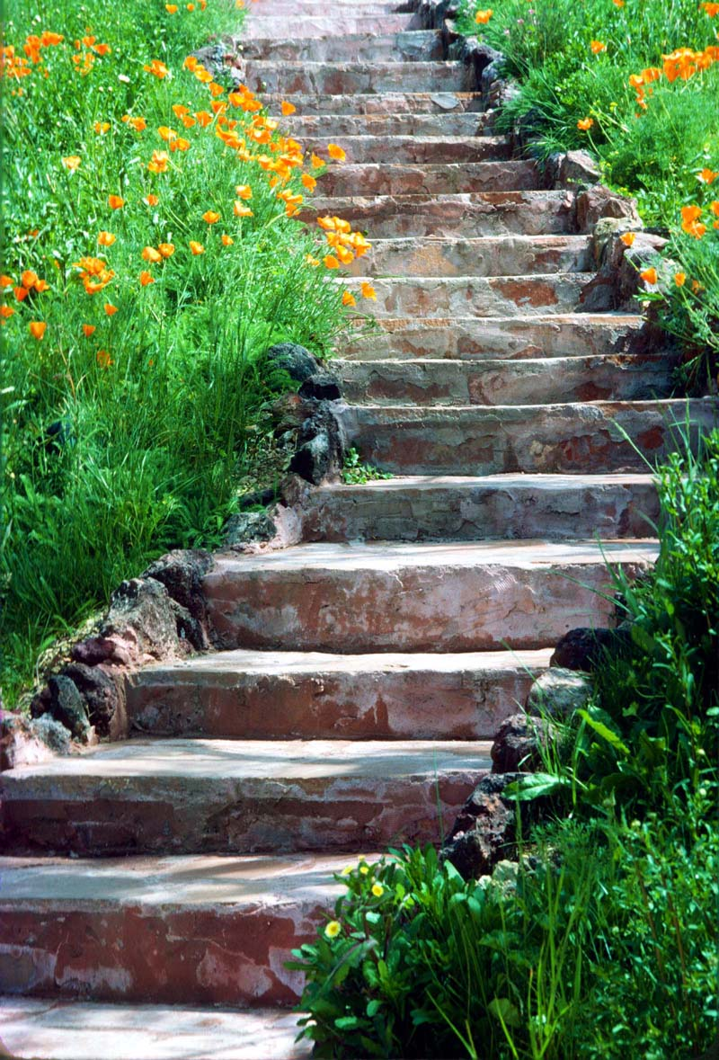 Rock Steps: Contemplating Beauty: Random Things I Find Beautiful