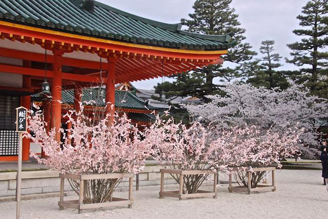 Tempat terbaik menikmati sakura di Kyoto
