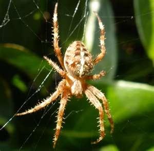 Arachnophobia - Rasa takut terhadap laba-laba