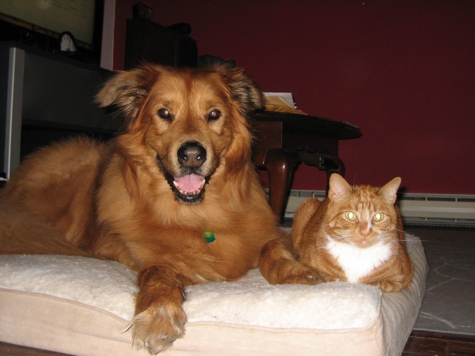 Vet S Best Moisture Mist Conditioner For Dogs