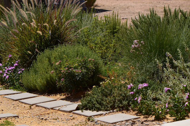 Tuesday View, small sunny garden, amy myers, desert garden, July, summer