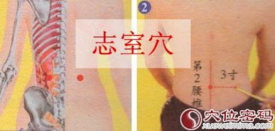 志室穴位 | 志室穴痛位置 - 穴道按摩經絡圖解 | Source:xueweitu.iiyun.com