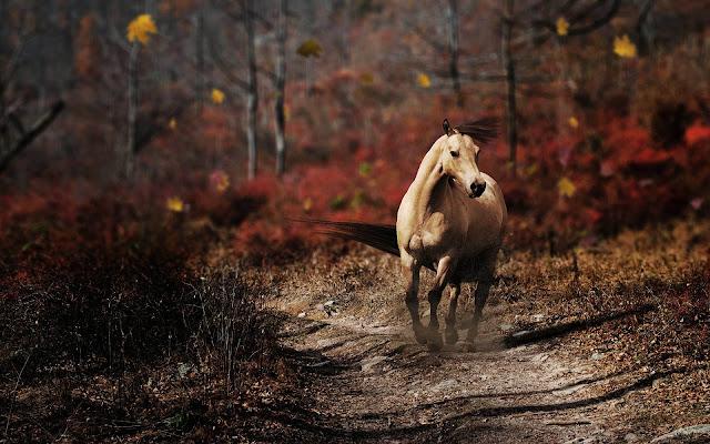 Paard op een bospad in de herfst