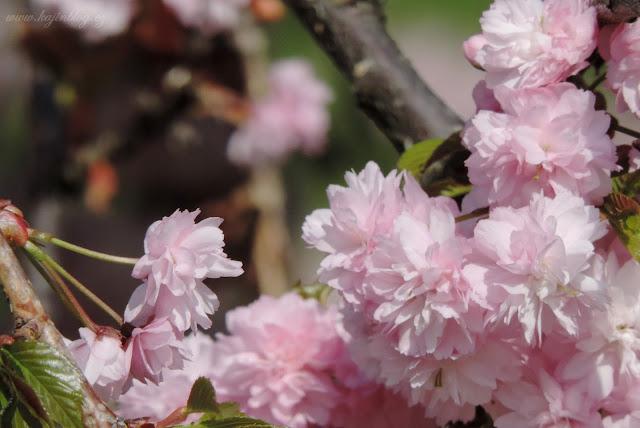 jaro kájin blog