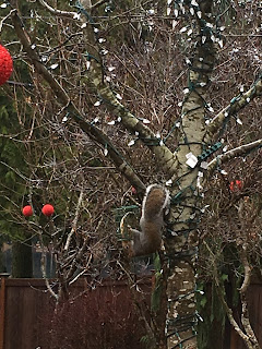 Photo of suet feeder with DIY vegan suet hanging on a tree branch outside with squirrel hanging upside down eating. https://trimazing.com/