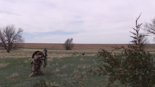 turkey fanning decoy with bowhunter