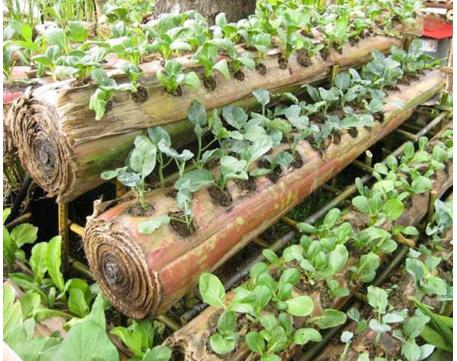 Pemanfaatan Batang Pisang Sebagai Media Tanam Sayuran