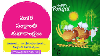 Text BG in Pink yellow purple at left side Three big pots of pongal sugar canes banana leafs gangireddu and sun on green colour back ground at right hand side of image. Makara sankranti wishes in Telugu Language.
