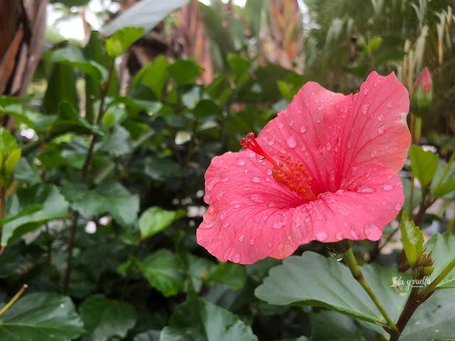 Flor en el jardín del Asia Gardens