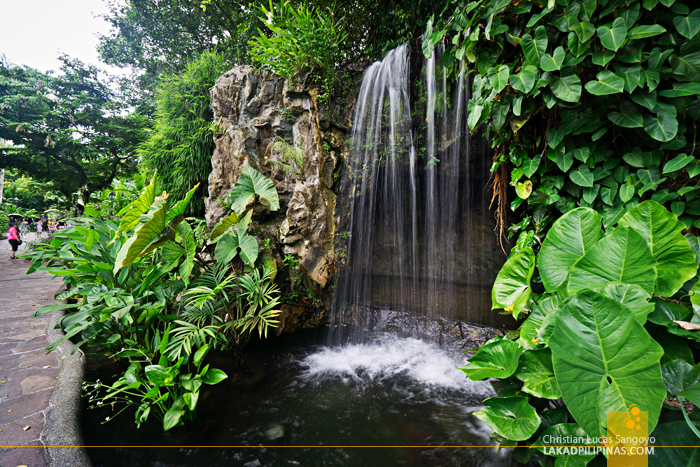 Singapore Botanic Gardens Waterfalls