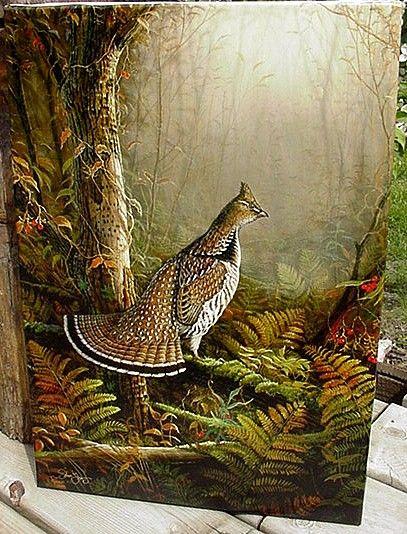 Belas Fotos de Aves