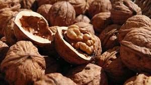 kacang kenari, kacang walnut, bermanfaat untuk otak, makanan otak