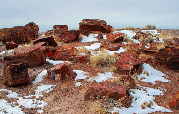 Petrified wood in Arizona, United States