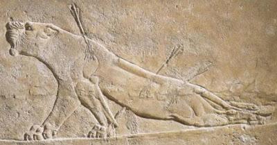 leona herida asurbanipal