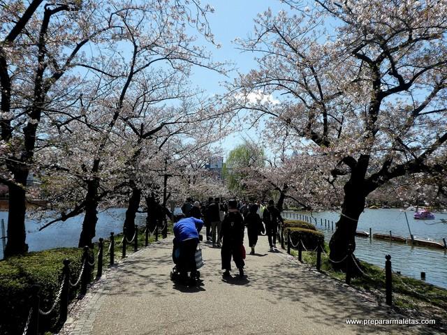 cerezos en flor parque Ueno Tokio
