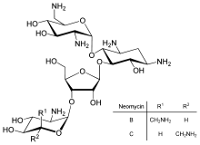 Neomisin merupakan Golongan Obat Antibakteri antibiotik aminoglikosida Neomisin