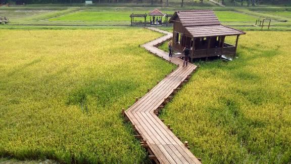 Taman padi taman botani shah alam rumah di bendang
