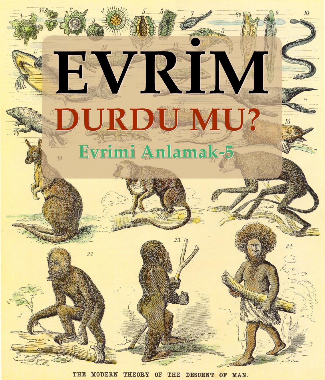 İnsanın evrimi: durdu ya da değil mi