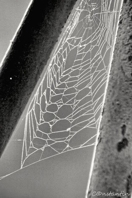 """Pânza de paianjen atrage atenția prin țesătura """"defectă"""" - blog FOTO-IDEEA"""