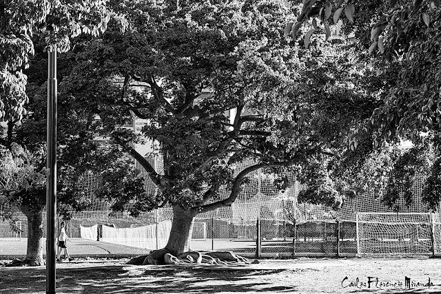 Blanco y Negro. Las redes de una cancha de futbol en Parque Las Heras.
