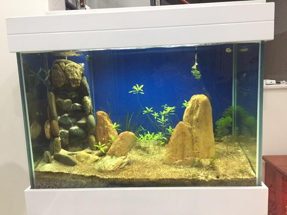 Không nên dùng 2 loại đá khác nhau cho một hồ thủy sinh