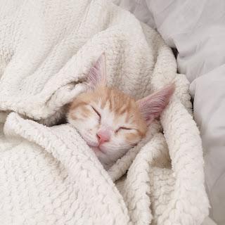 猫アレルギー 布団