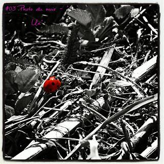http://rythme-indigo.blogspot.com/2014/01/photo-du-mois-3-un.html