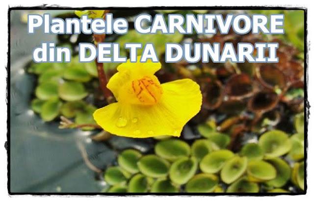 curiozitati despre plante carnivore delta dunarii