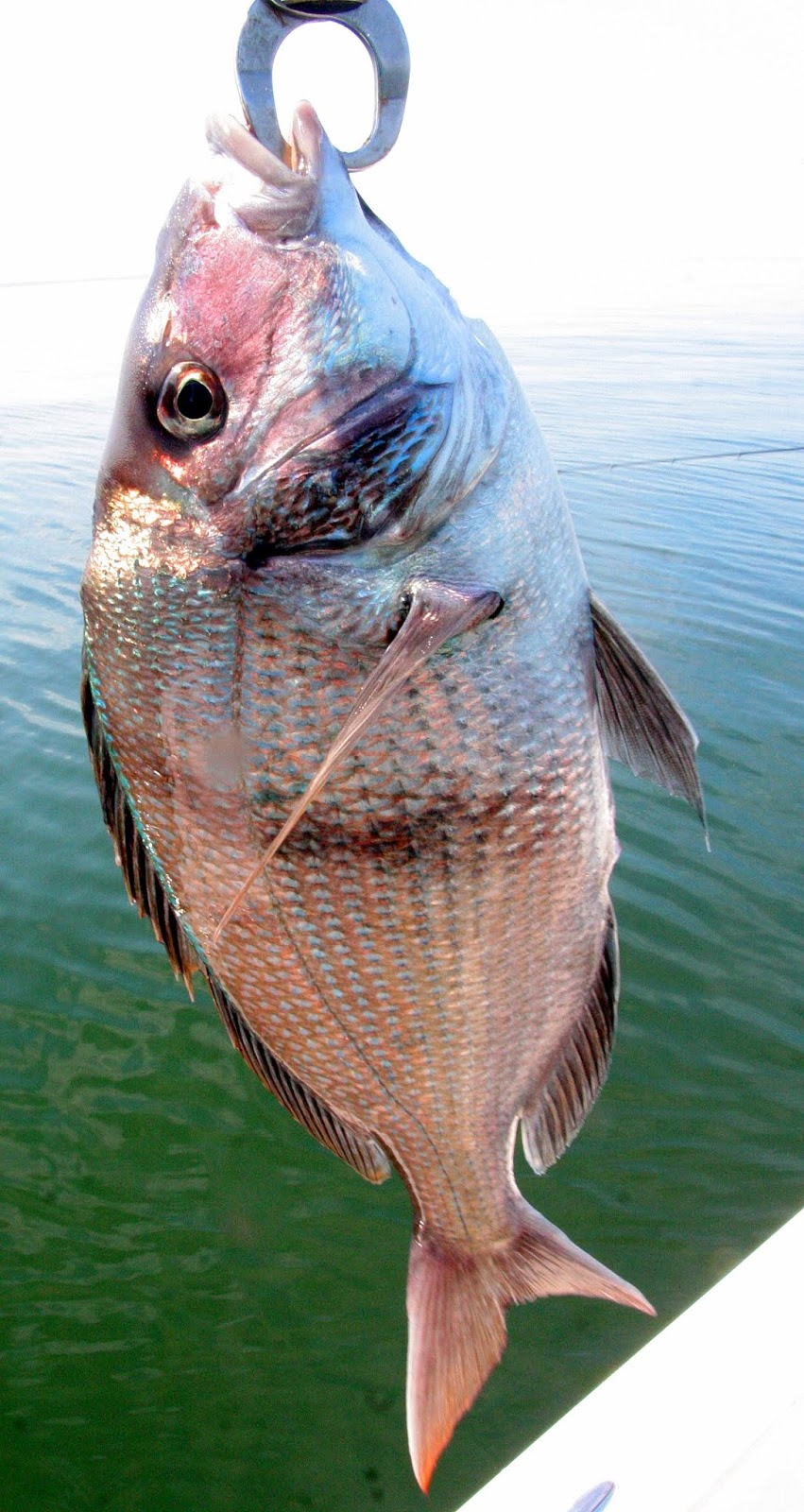 Changes to marine for Ct saltwater fishing regulations