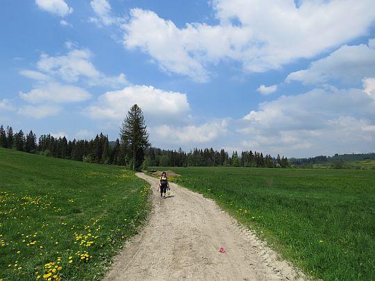 Droga biegnąca pośród łąk wsi Pieniążkowice.