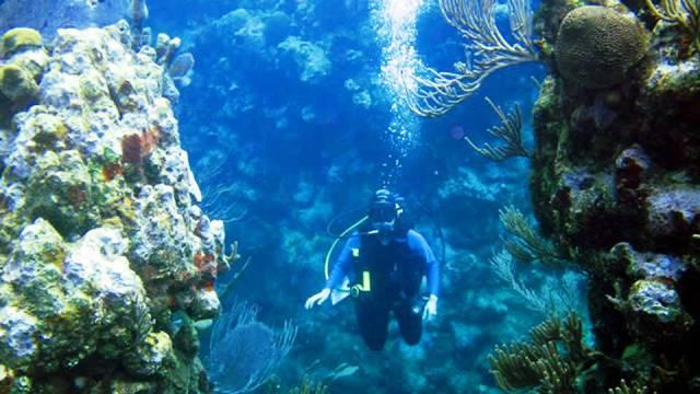 ท่องเที่ยว, แนวหินปะการัง, มัลดีฟส์, สถานที่ดำน้ำ, สถานดำน้ำทั่วโลก, อันดับสถานที่ดำน้ำ, อูทิล่า ฮอนดูรัส (Utila, Honduras)