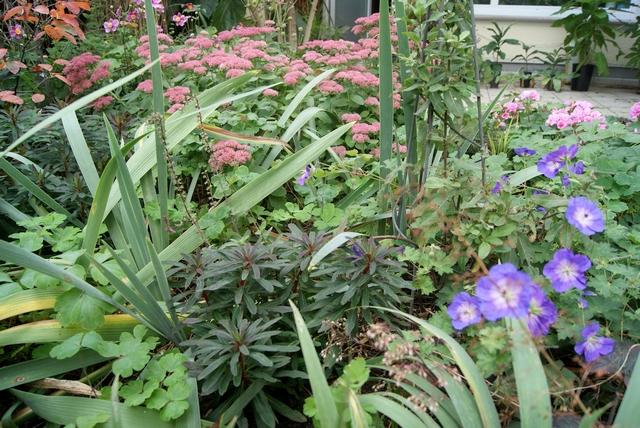 Herbstbepflanzung mit Euphorbia Sedum Geranium Rozanne