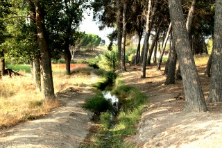 Pequeños caminos que salen de la Senda de Valdegurriana.