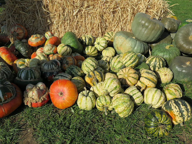 pumpkins, lathcoats farm, apple day, essex